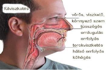 Dr. Szalmay - fül-orr-gégész szakorvos- Allergia